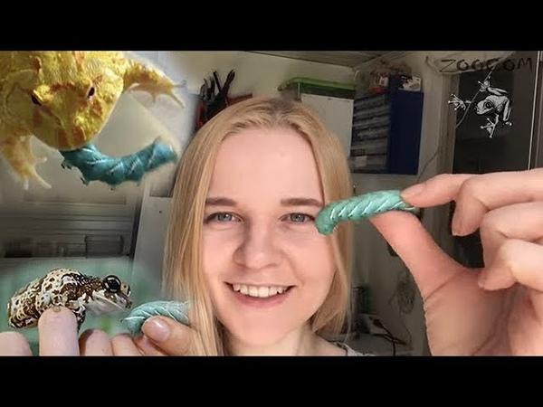 Как накормить лягушку гусеницей