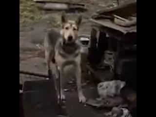 В Подмосковье у мужчины убили собак и сожгли дом