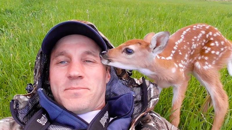 Uomo salva piccola cerbiatta ferita e lasciata indietro dalla sua famiglia