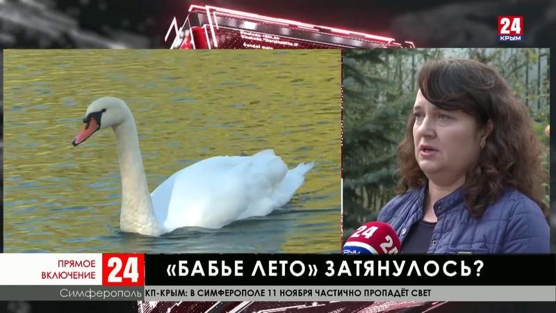 Десятого ноября в Крыму зафиксирован температурный рекорд – плюс двадцать семь градусов