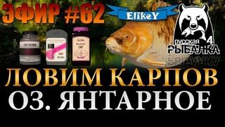 За Карпами!  Поймаем Трофей  Фарм Серебра и Опыта  Озеро Янтарное  Русская Рыбалка 4  ЭФИР #62