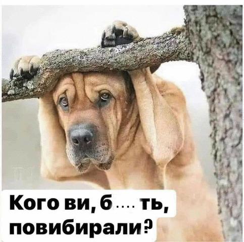 Щодня стає дедалі гірше. Наш уряд годує нас обіцянками, - громадяни України, які чекають евакуації з Уханя, записали звернення - Цензор.НЕТ 4940