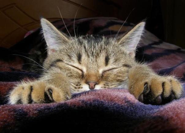 так хочется спать фото крышке навесы крепятся