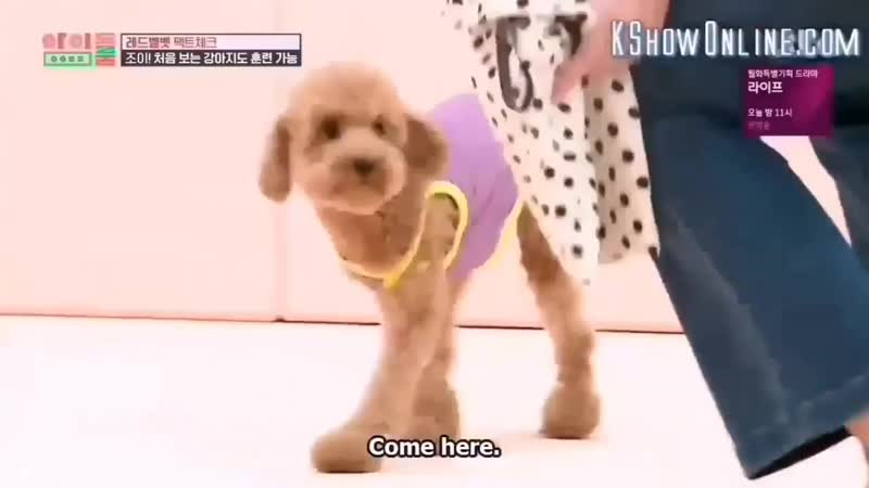 Sps || i dont like kpop but thank god joy is a dog whisperer 💘
