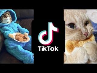 Смешные и милые приколы с животными #1 / Животные в TikTok / Питомцы в ТикТок