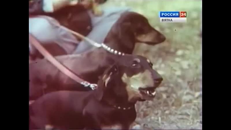 1980 год Рассказы об Охоте Интересный Док фильм СССР