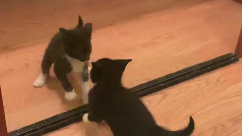 Cats Kittens Cute Playing Videos CatsKittens 45