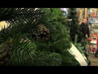 В Харькове стартовали продажи елок: что выгоднее - искусственная или живая и пахнущая?