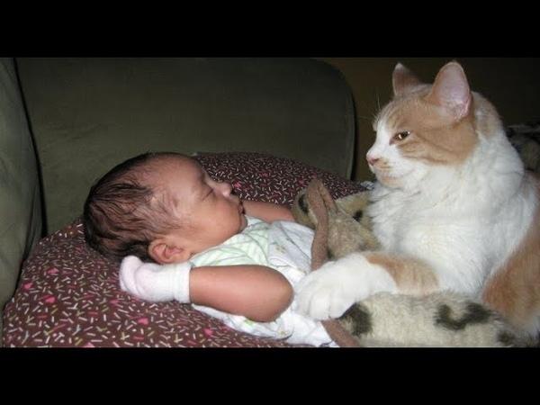 감동 고양이가 아기를 위험으로부터 보호합니다 2019
