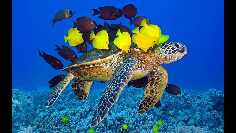 Океан Очень красивые рыбки