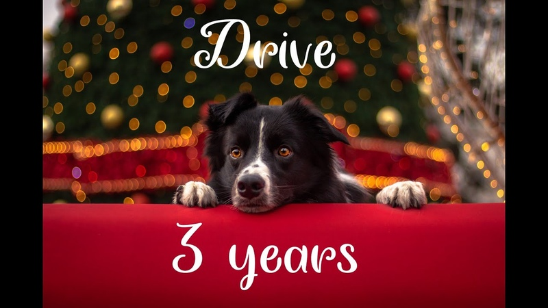 Drive Border Collie 3 years
