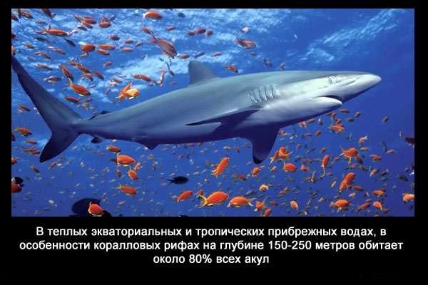 Valteya - Интересные факты о акулах / Хищники морей.(Видео. Фото) - Страница 2 8f-c_u84YEo
