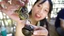 Steamed Snail Stuffed Snails Steamed with Lemongrass
