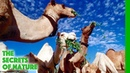 Libyan Sahara Water from the Desert The Secrets of Nature