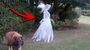 5 Scariest Entities Detected In The Daylight!