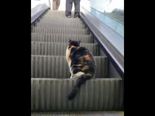 Where is this kitten going?
