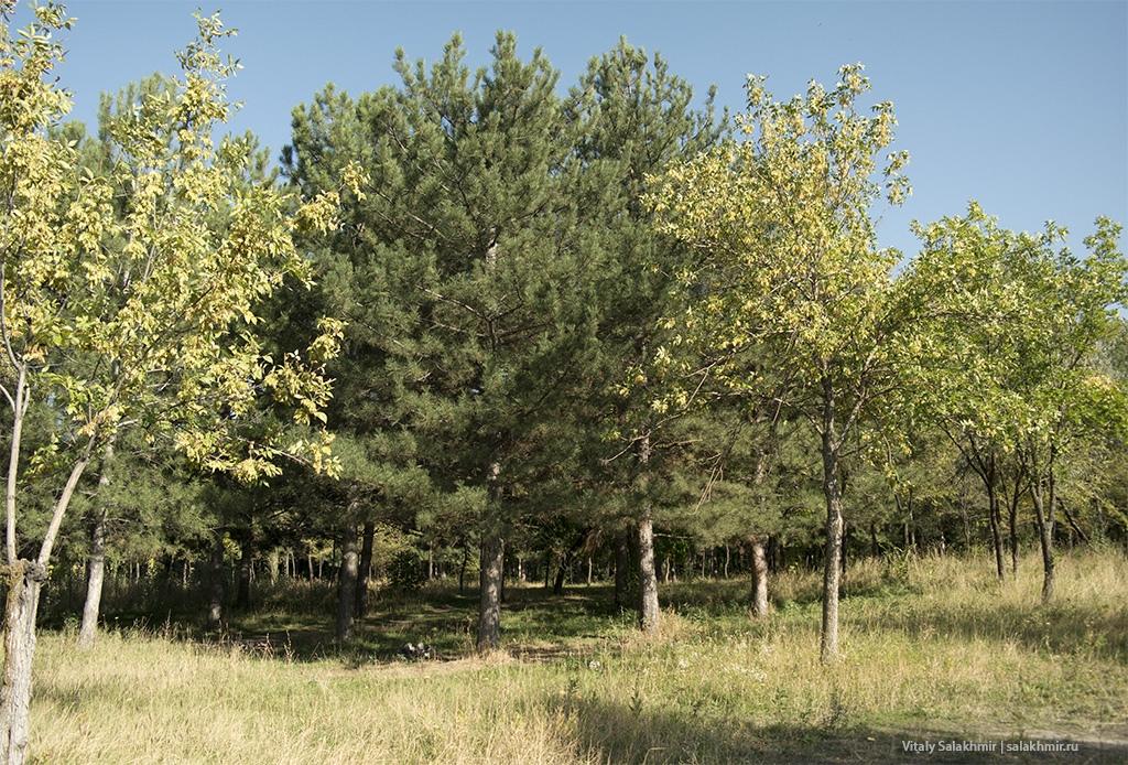 Деревья парка в Бишкеке, 2019