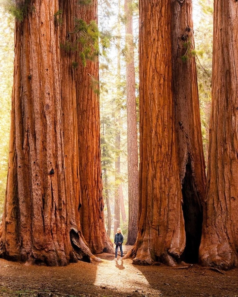 Национальный парк Секвойя (Калифорния, США)