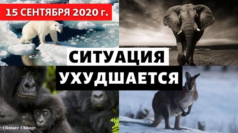 Популяция животных сократилась на две трети всего за 50 лет! Катаклизмы в мире! Выпуск 15 сентября.