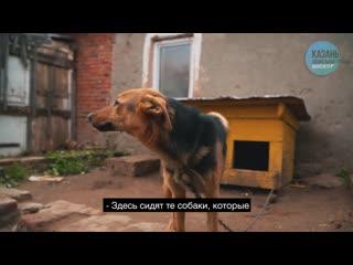 Приют для животных в Казани