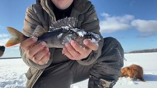 Зимняя рыбалка в Карелии март 2021(Зимняя рыбалка с комфортом в палатке)