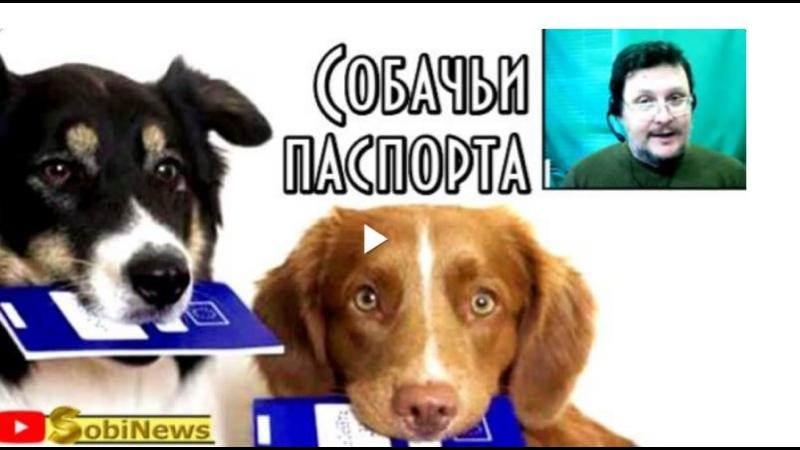 Как людей превращают в собак Новости SobiNews с Василием Миколенко