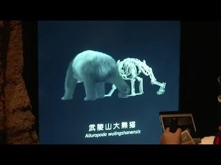 В Чэнду открылся первый в мире интерактивный тематический музей больших панд