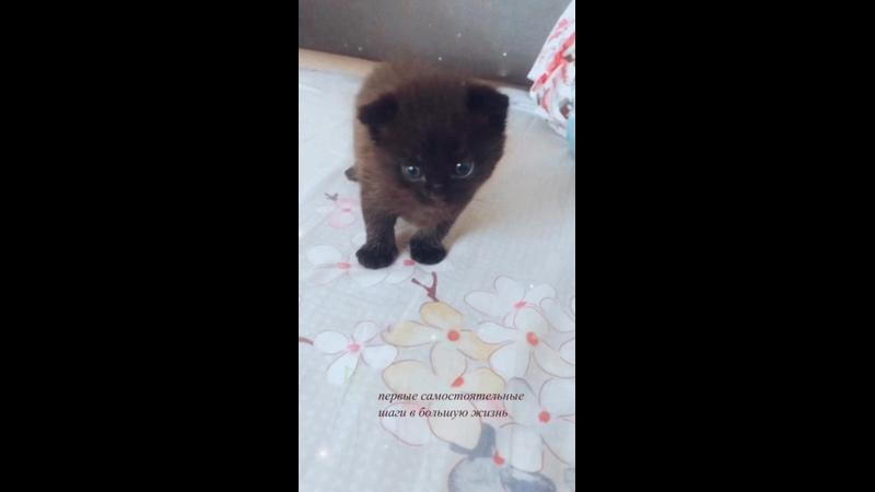 Видео от Анны Курьяновой