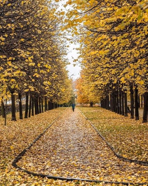 10 осенних фото, сделанных в Москве этом году от 📸...