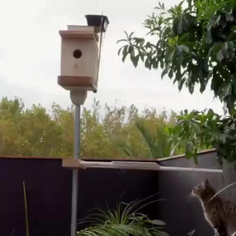 Эффективная защита скворечника от кошек