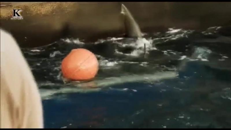 Акульи пастухи Линия огня 5 я серия 2012