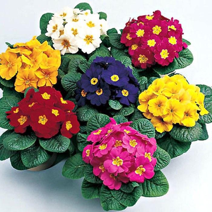 Какие цветы сажают на рассаду в феврале?, изображение №7