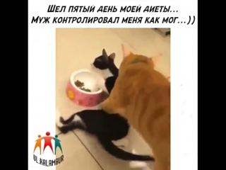 Шёл 5-ый день диеты. Муж контролирует, как может!!)))
