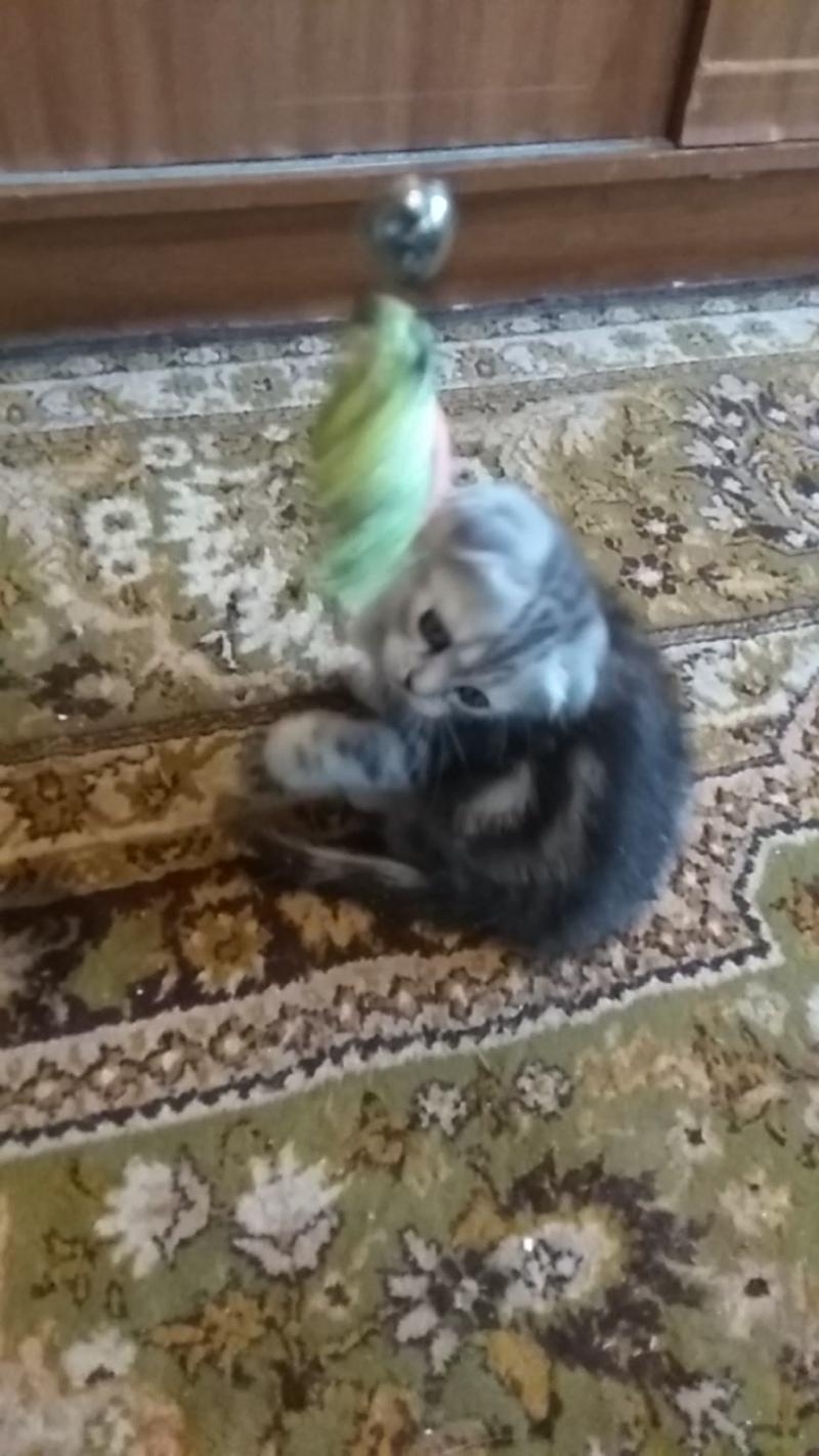 Играем с игрушкой