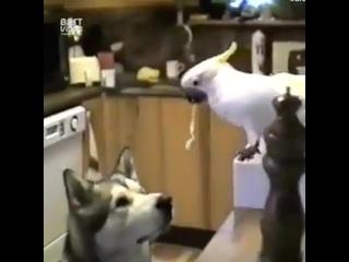 Иногда животные, намного человечнее самих людей byjulf ;bdjnyst, yfvyjuj xtkjdtxytt cfvb[