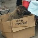 Фотоальбом Пашы Мурзикова