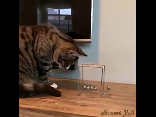 Кот-профессор продемонстрирует вам, переход потенциальной энергии маятника в кинетическую и наоборот