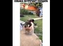 Кот в это время срёт в тапки!🐶😼😹