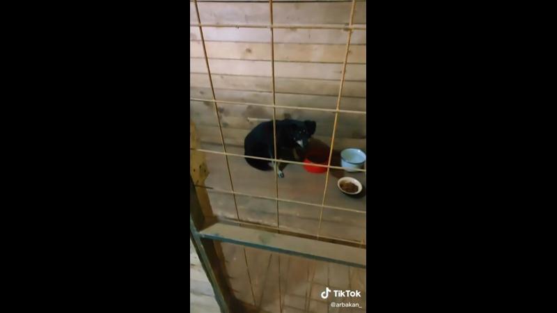 Видео от Дом для собак Васильки