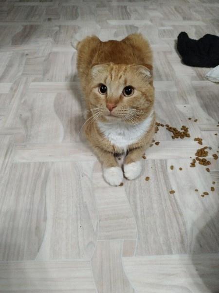 Помогите найти котика! Зовут Арес! 🆘 Живём на ст. ...
