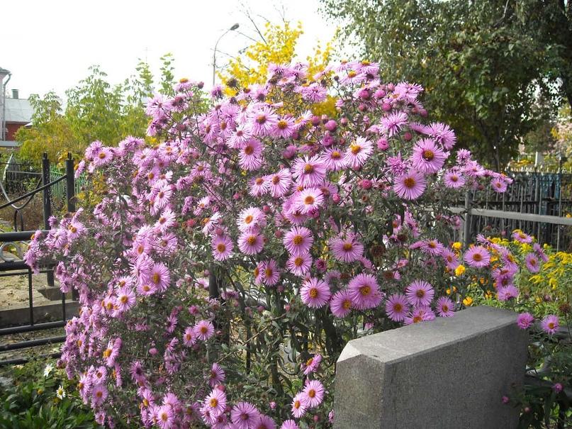 Троицкое кладбище Орла., изображение №24