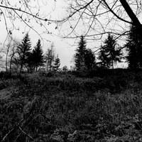 Darkwoods Gt