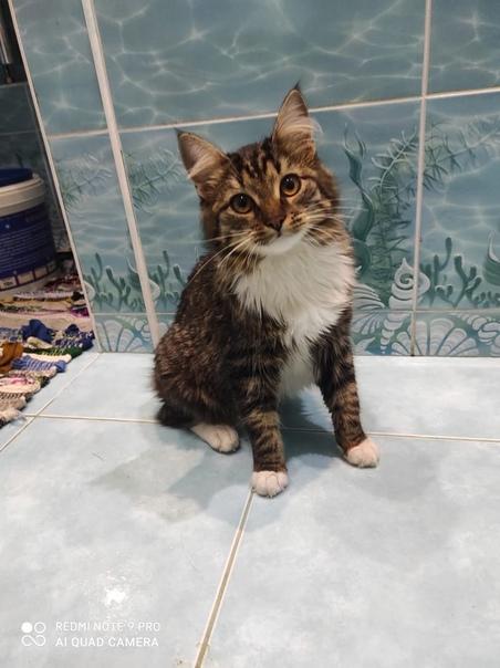 Ищу дом для котёнка-подростка. Зовут Катя, возраст...