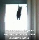 Акаев Тимур |  | 1