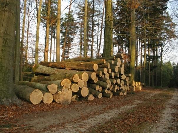 Омская прокуратура проверит вырубку леса в Чернолу...