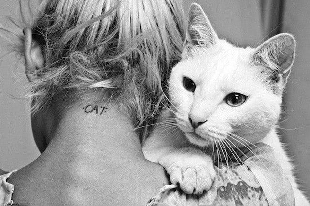 Какую пользу может принести кот?