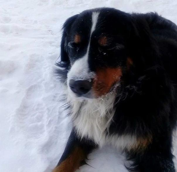 Омский пес спас заживо похороненных котят