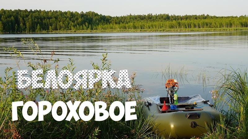 БЕЛОЯРКА ЛЕЩ ГОРОХОВОЕ