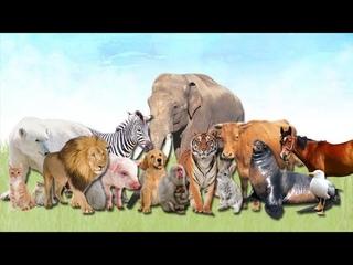 Распаковка фигурок животных.Наша новая коллекция животных!!!!! это что - то нереальное!!!!
