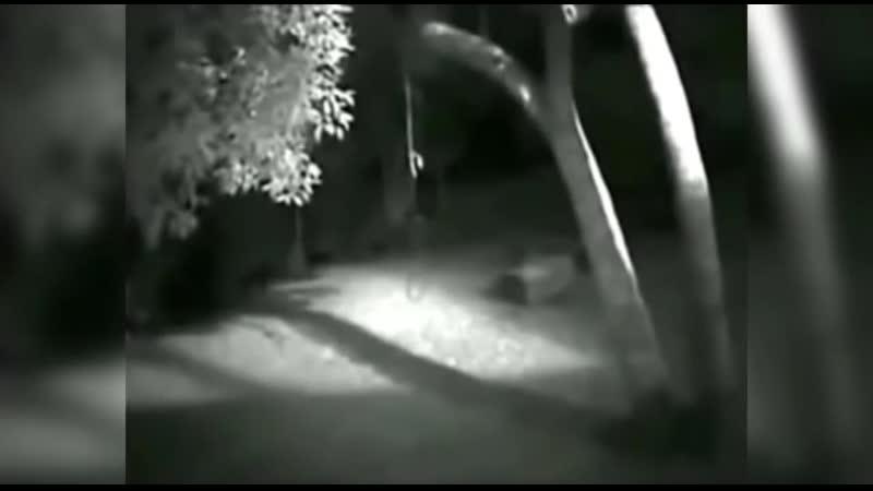 Камера видеонаблюдения запечатлила существо похожее на оборотня. криптозоология существо зверь животное волк горила ночь